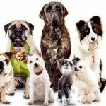 Как открыть магазин зоотоваров для животных?
