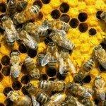 Бизнес-план пчеловодства бесплатно.
